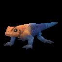 Agama_Lizard